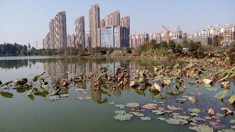 《实地查看秀湖生态湿地公园》